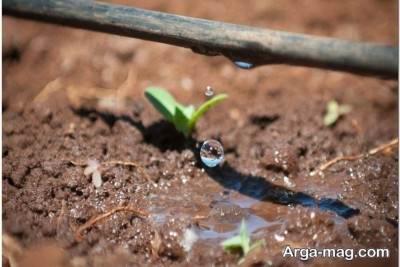 نکات مهم در آبیاری به روش قطره ای