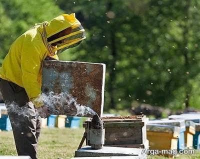 شغل زنبورداری و پرورش زنبور عسل
