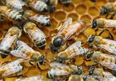 درجه حرارت کندو در پرورش زنبور عسل