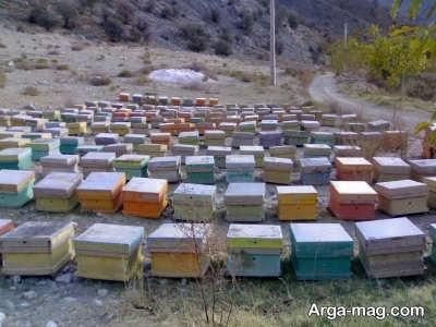 انواع روش های روش های پرورش زنبور عسل