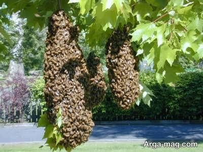 نحوه پرورش زنبور عسل