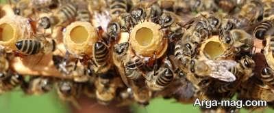 مزایای پرورش زنبور عسل
