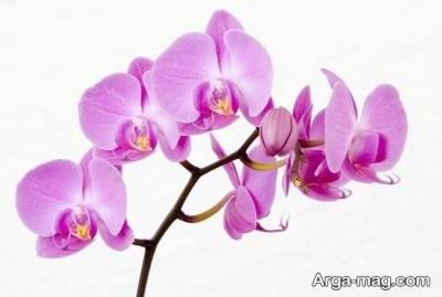 نحوه پرورش و نگهداری گل ارکیده