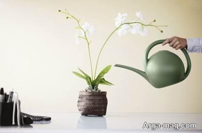 چگونگی پرورش و نگهداری از گل ارکیده