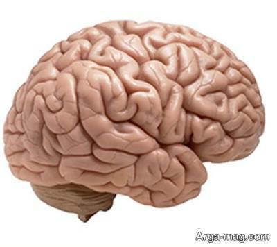 ورم مغز