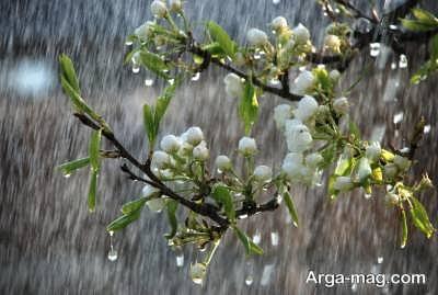 تعبیر مشاهده باران در عالم رویا