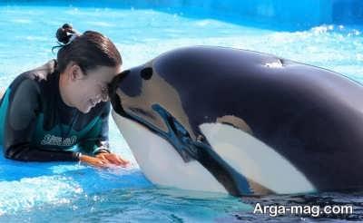 تعبیر مشاهده نهنگ در عالم رویا
