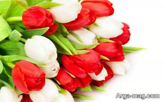 عکس های جالب گل لاله