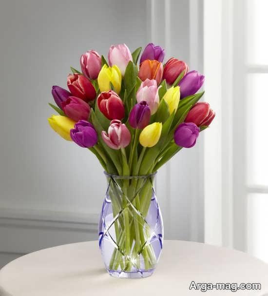 عکس قشنگ گل لاله