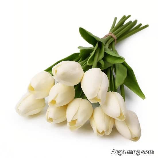 عکس خاص گل لاله