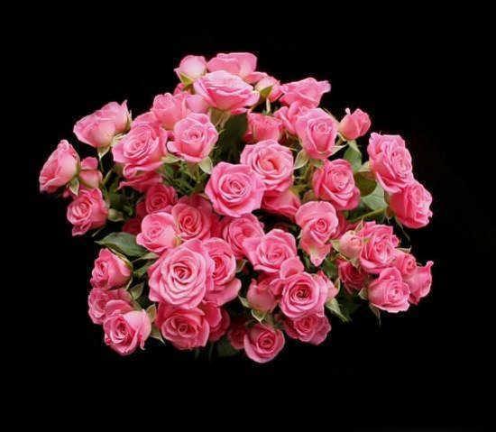 عکس دسته گل جالب و عاشقانه صورتی رنگ