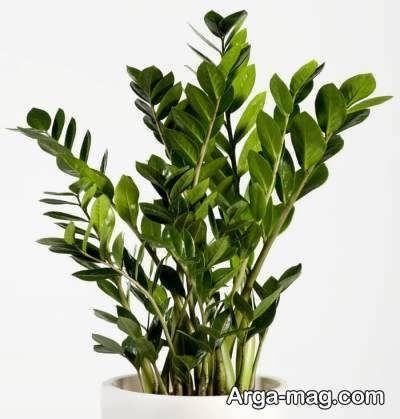 رانمای نگهداری از گیاهان تزیینی
