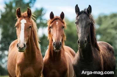تعبیر دیدن اسب