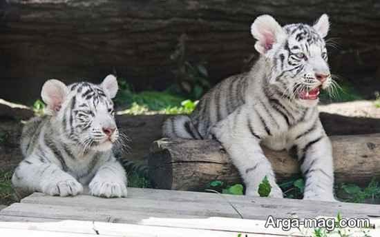 باغ وحش دیدنی مسکو