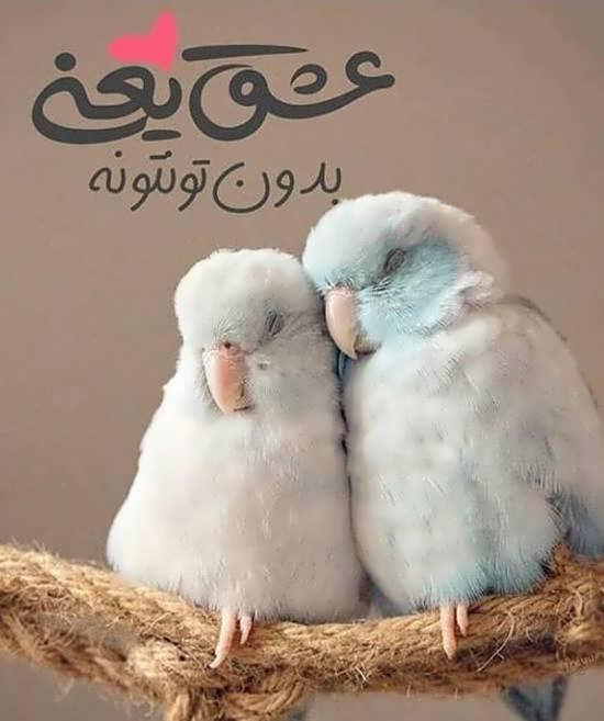 عکس با متن عاشقانه شاد و مفهومی برای پروفایل