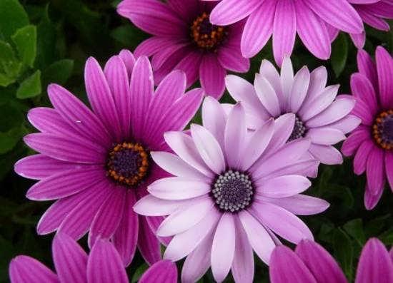 ایده های تصاویر گل های خاص و شگفت انگیز