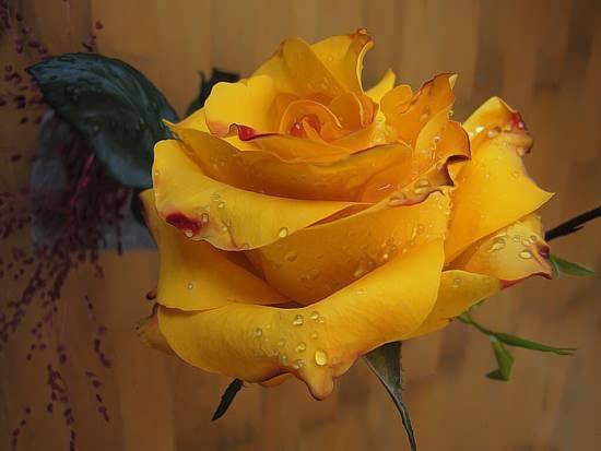 جدیدترین عکس گل های خاص و رویایی در دنیا