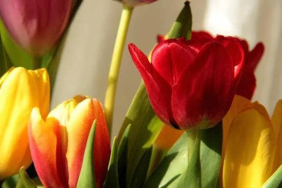 انواع ایده های تصویر گل های خاص و شگفت انگیز