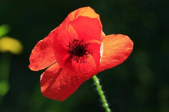 نمونه هایی دوست داشتنی از عکس گل های متمایز و متفاوت