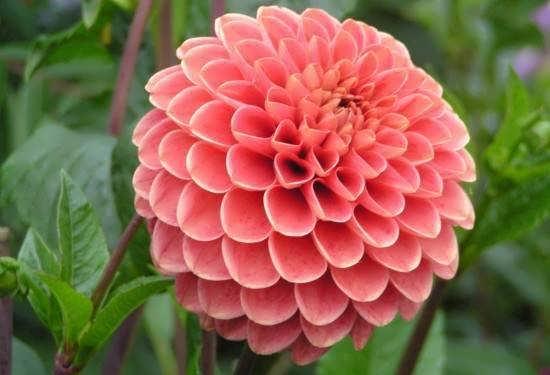 تصویر گل های خاص و متمایز جهان