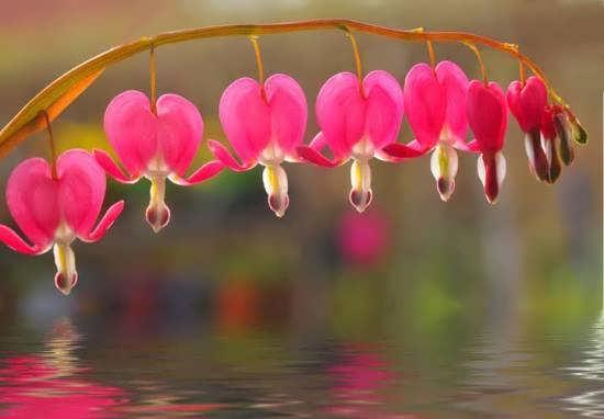انواع تصاویر گل های خاص و شگفت انگیز جهان