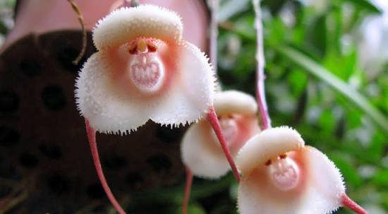 انواع عکس گل های ویژه و متفاوت جهان