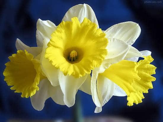جدیدترین و زیباترین عکس گل های خاص دنیا