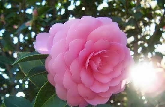 نمونه های جدیدی از عکس گل های متفاوت و ویژه