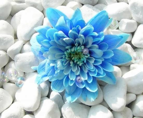 ایده هایی جالب از تصویر گل های خاص و زیبا