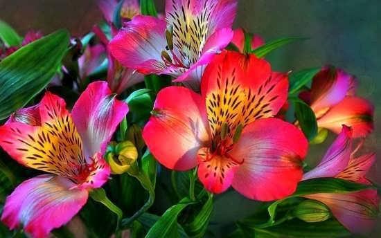 انواع عکس گل های خاص و رویایی