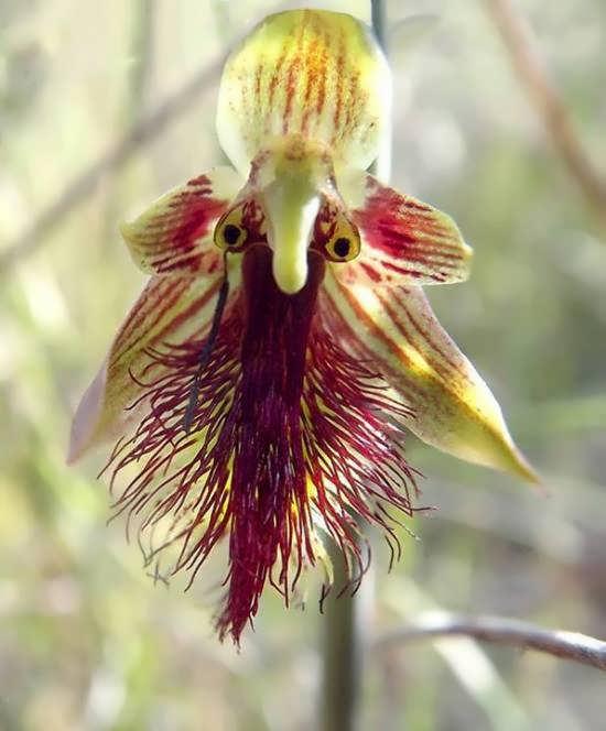 انواع تصاویر گل های خاص با شکلی عجیب و شگرف