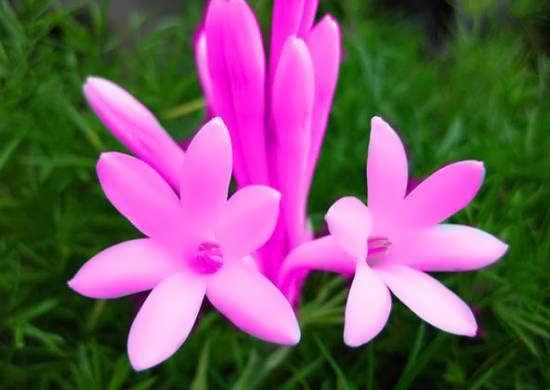 ایده های دوست داشتنی و جالب عکس گل های خاص