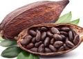 نیاز های مورد نظر برای کاشت درخت کاکائو