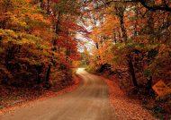 زیباترین و جذابترین عکس طبیعت پاییزی برای پروفایل