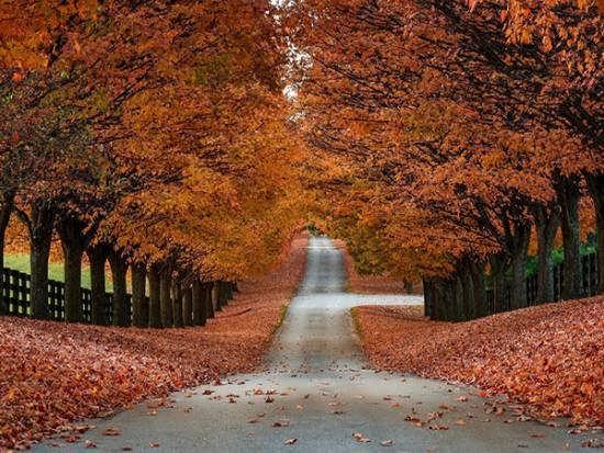 نمونه هایی زیبا و دوست داشتنی از تصویر طبیعت پاییزی