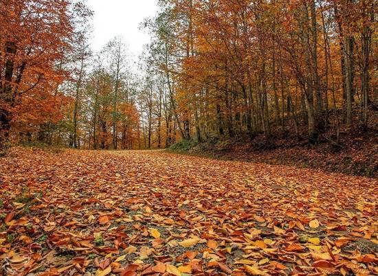 انواع عکس طبیعت پاییزی زیبا برای تزیین صفحات مجازی