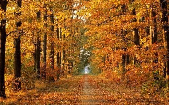 ایده های عکس طبیعت پاییزی برای پروفایل و دسکتاپ