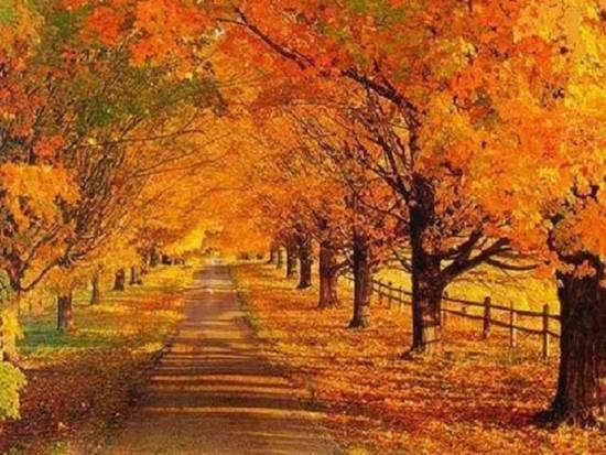 انواع عکس طبیعت پاییزی سومین سال از سال