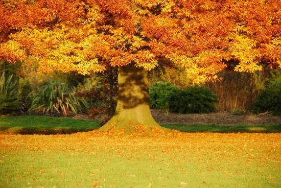 ایده های عکس طبیعت پاییزی با جذابیت و لطافت منحصر به فرد