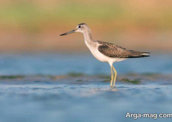 انواع عکس پرندگان مهاجر زیبا و دوست داشتنی