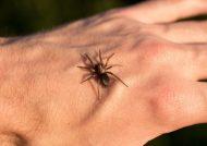 درمان نیش عنکبوت با روش های خانگی
