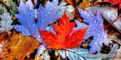 متن درباره فصل پاییز