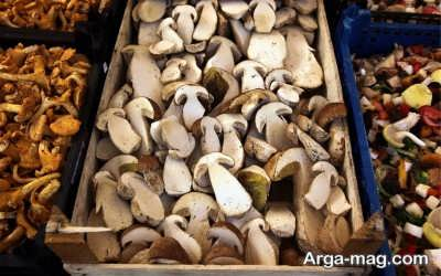 پرورش قارچ صدفی در درون جعبه ها