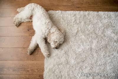 بیماری هایی که در سگ چاو چاو اتفاق می افتد