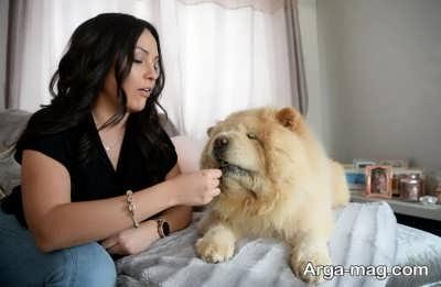 چربی مورد نیاز سگ چاو چاو