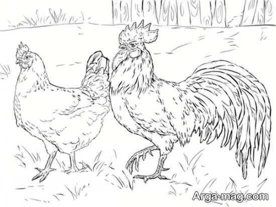 مدل های متفاوت کشیدن مرغ
