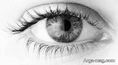 خواص کیوی برای داشتن چشم هایی سالم