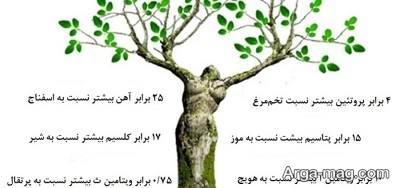 غفواید باورد نکردنی درخت معجزه