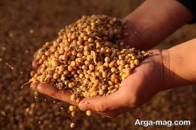 مصرف دانه های سویا برای تامین پروتئین مورد نیاز بدن