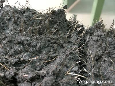 استفاده از مواد مغذی برای تقویت خاک کاکتوس